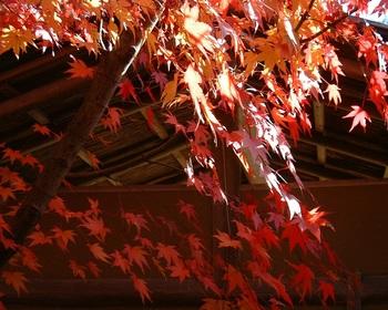 15茶室の紅葉(1).JPG