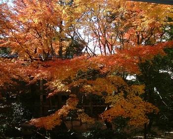 18茶室の紅葉(4).JPG