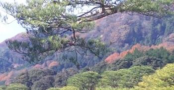 23苔庭の紅葉した裏山.jpg